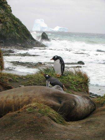 Icebergs and wildlife tempt distraction from EIT student Steve Szekely
